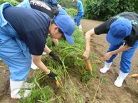 有機栽培の実践